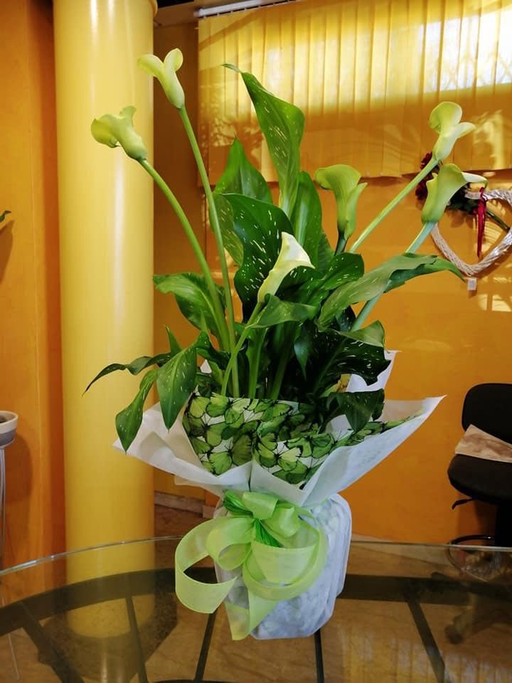 piante fiorite - Fiorista show room Magda a Castelnuovo Rangone