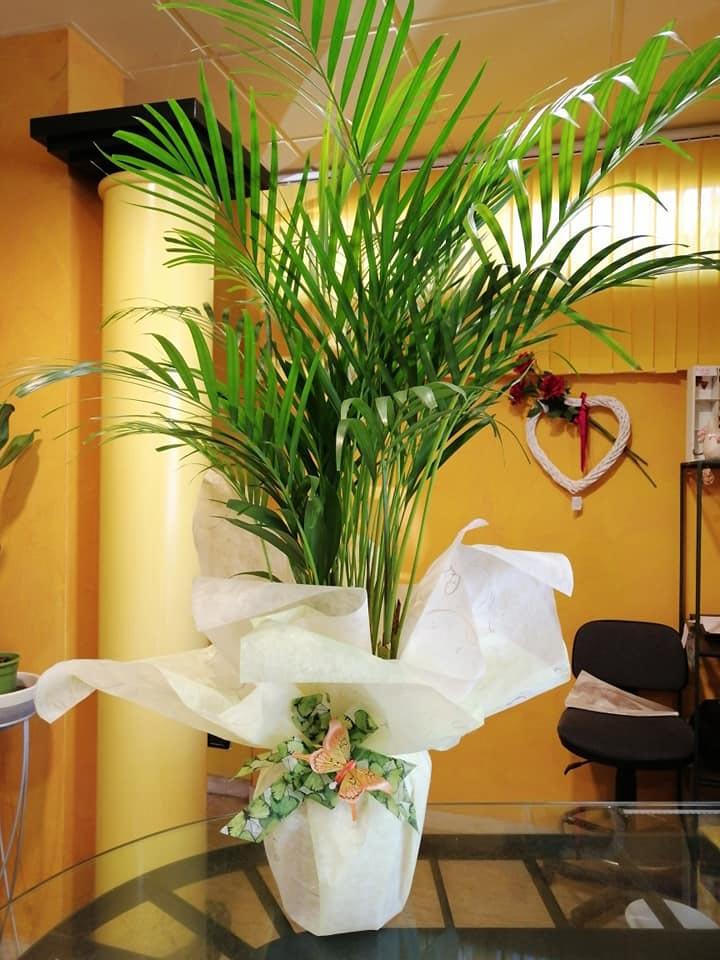 piante verdi - Fiorista show room Magda a Castelnuovo Rangone